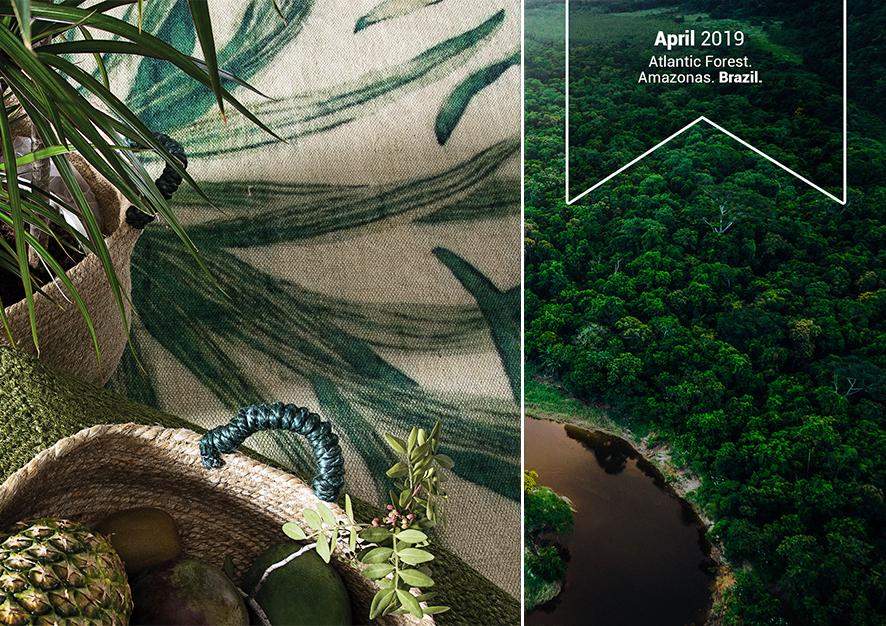 Naturaleza y Sostenibilidad: Bosque Atlántico, Amazonas. Brasil.
